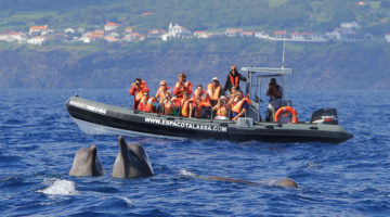 observation dauphins