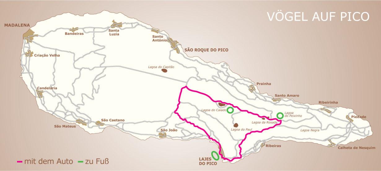 Vogelbeobachtung in Lajes do Pico und im Naturschutzgebiet von Caveiro