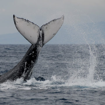 Dolphins, whales & men