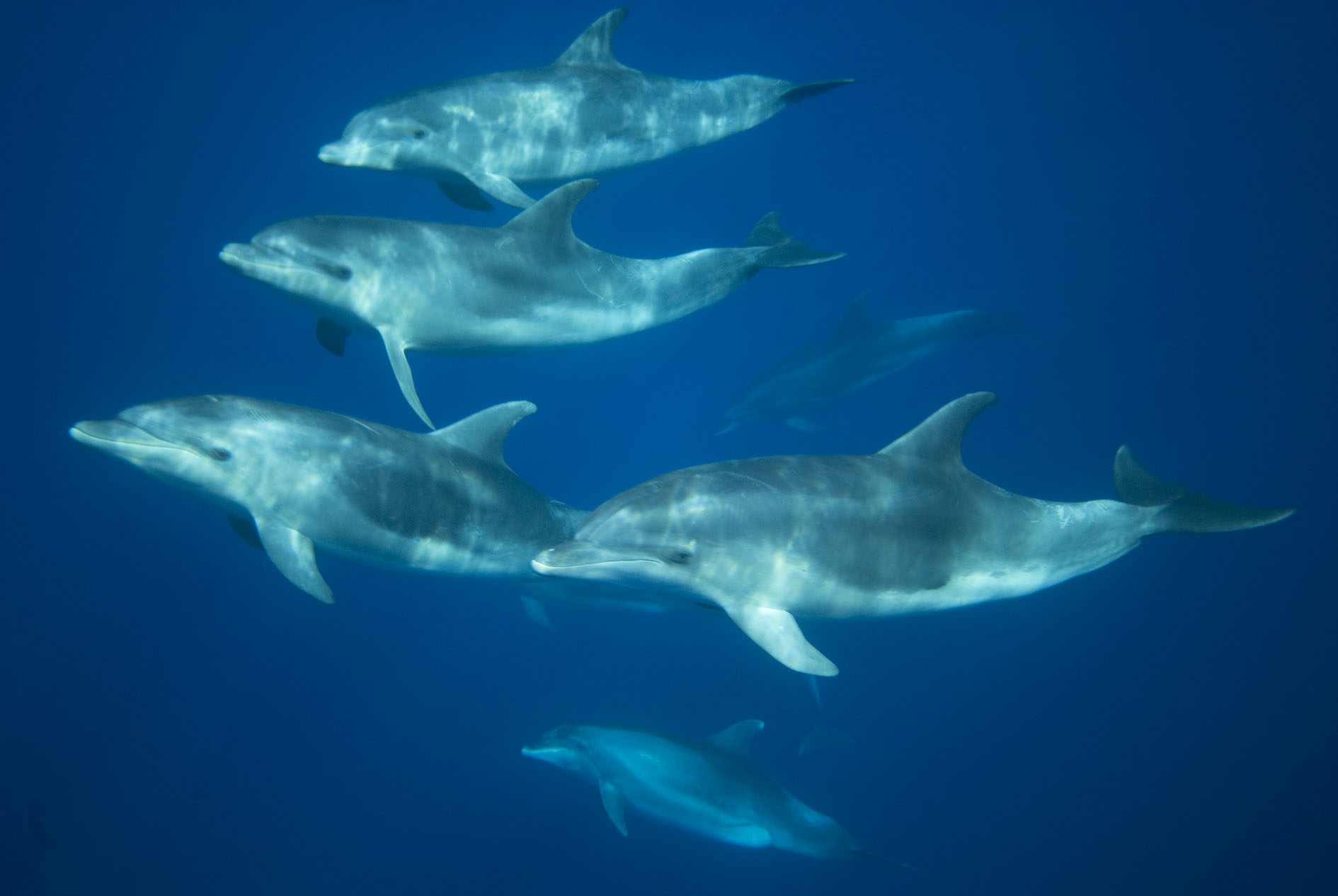 Tursiops group