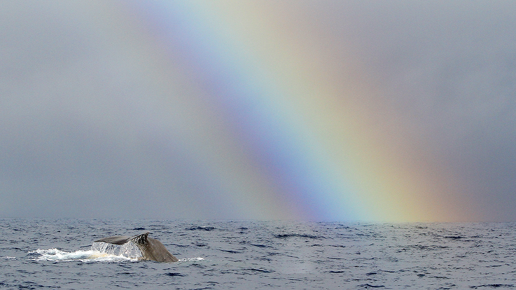 The Whale And The Rainbow