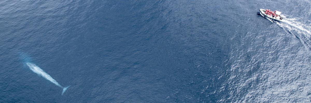 Blue whale Espaço Talassa boat