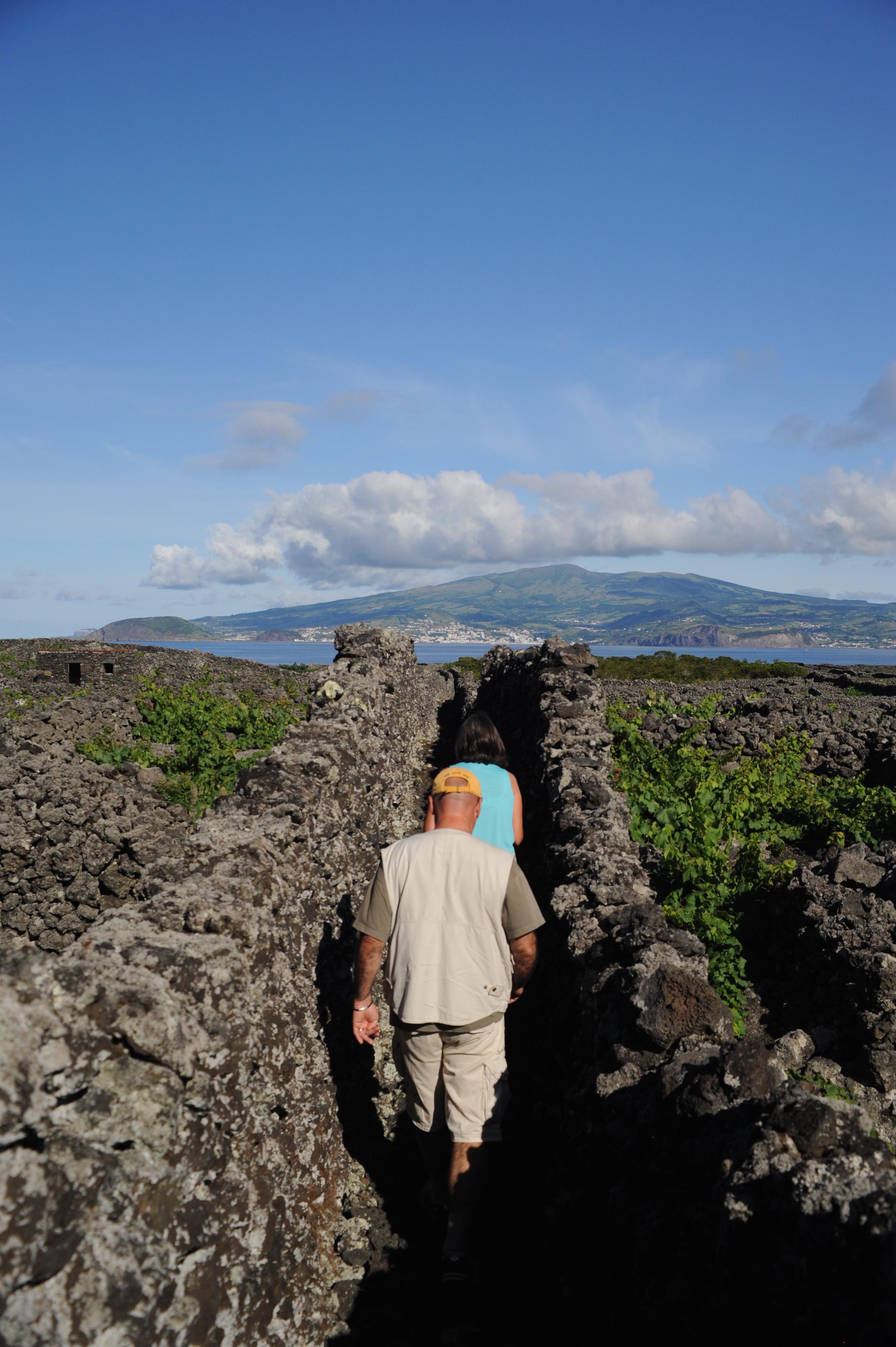 Vignoble Pico Açores