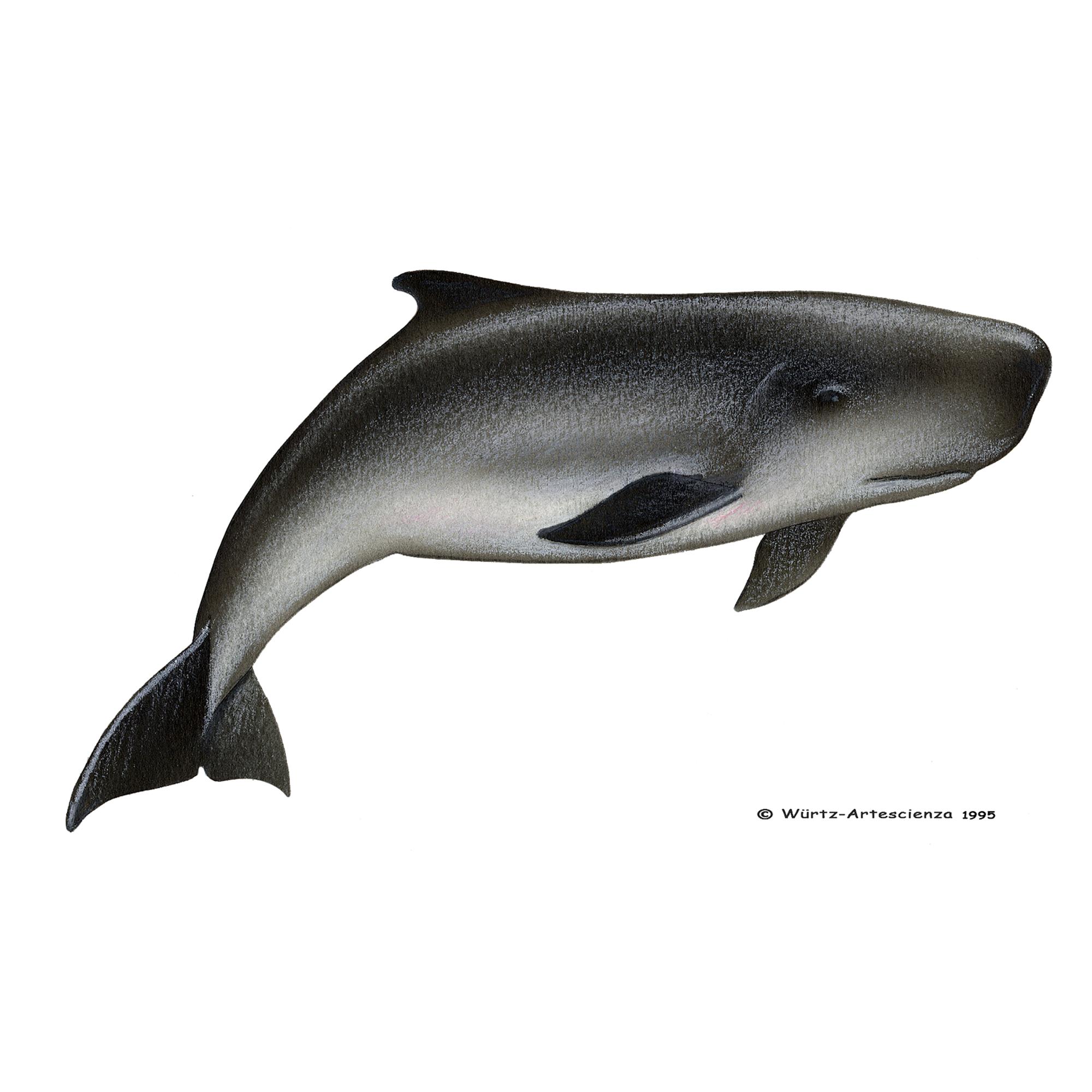 Wale Beobachtet Von Espaço Talassa
