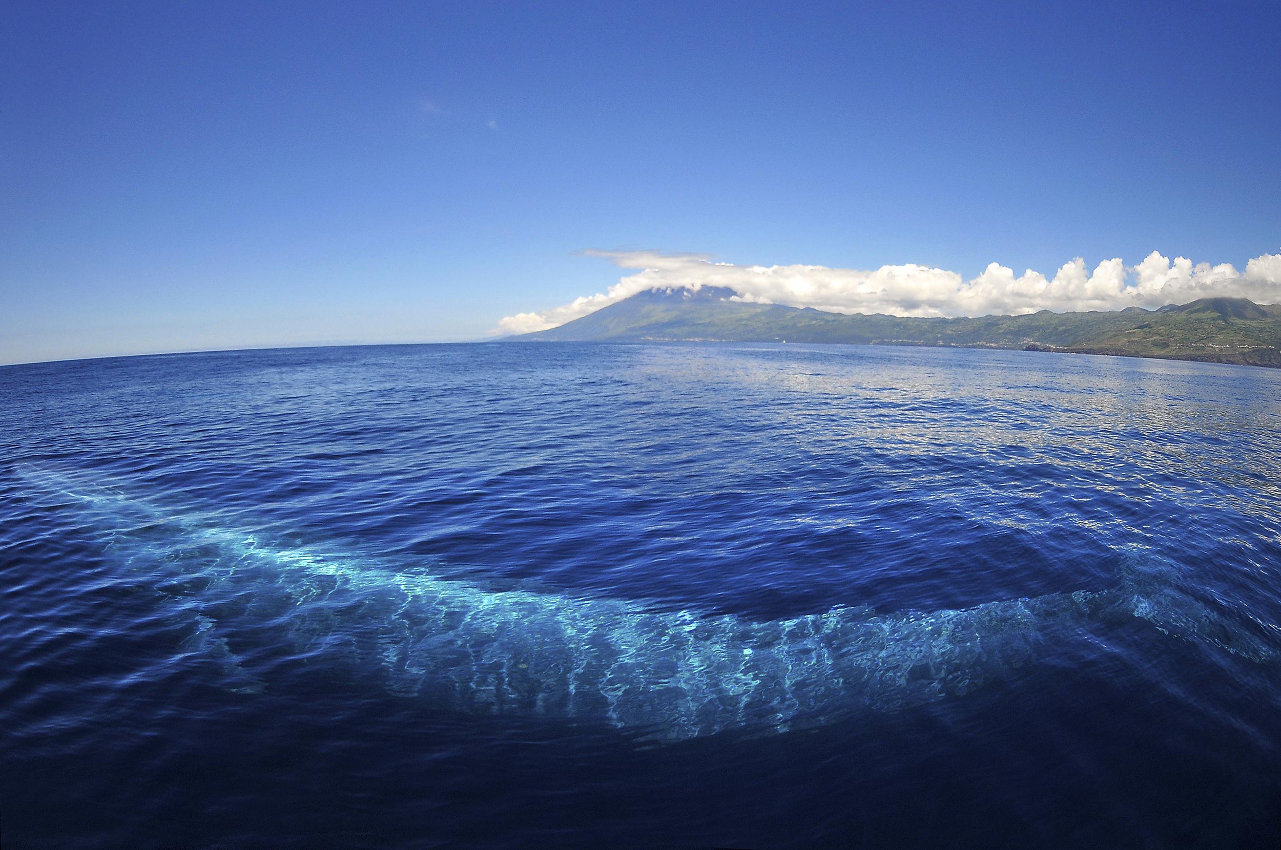 Blue whale & Pico mount