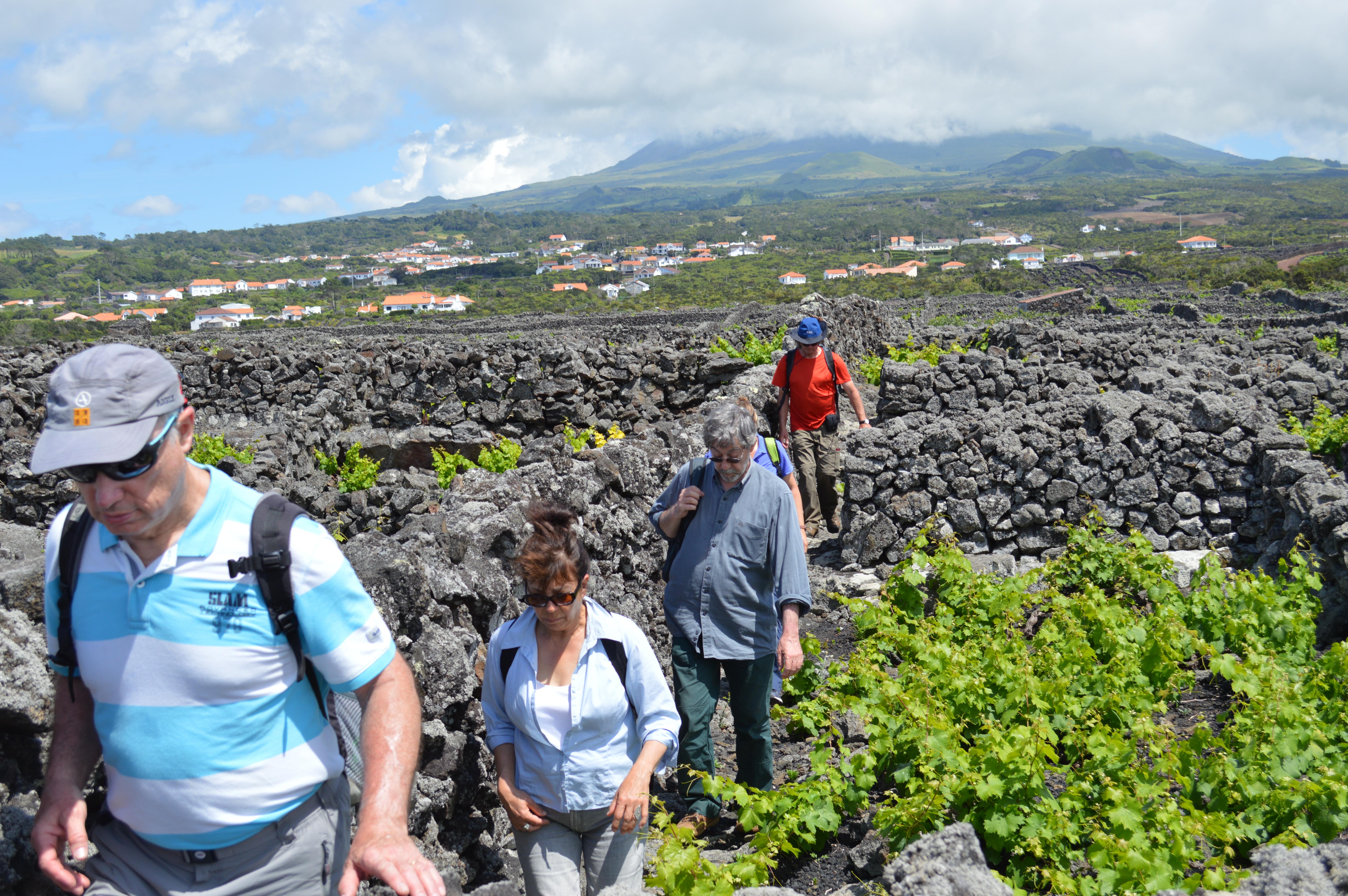 Pico Vineyard