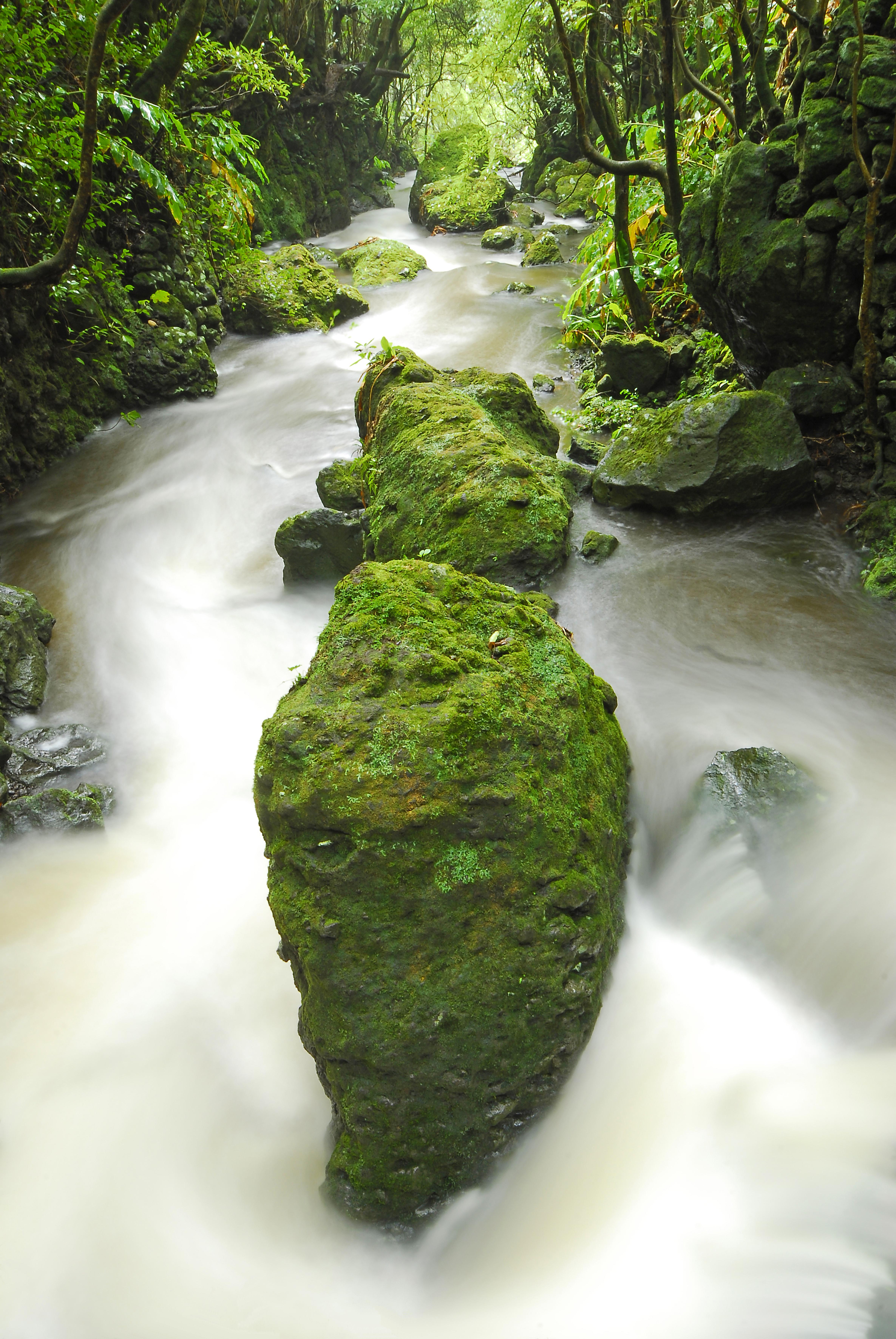 Torrent Pico Açores