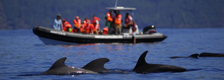 Pilote whale Espaço Talassa boat