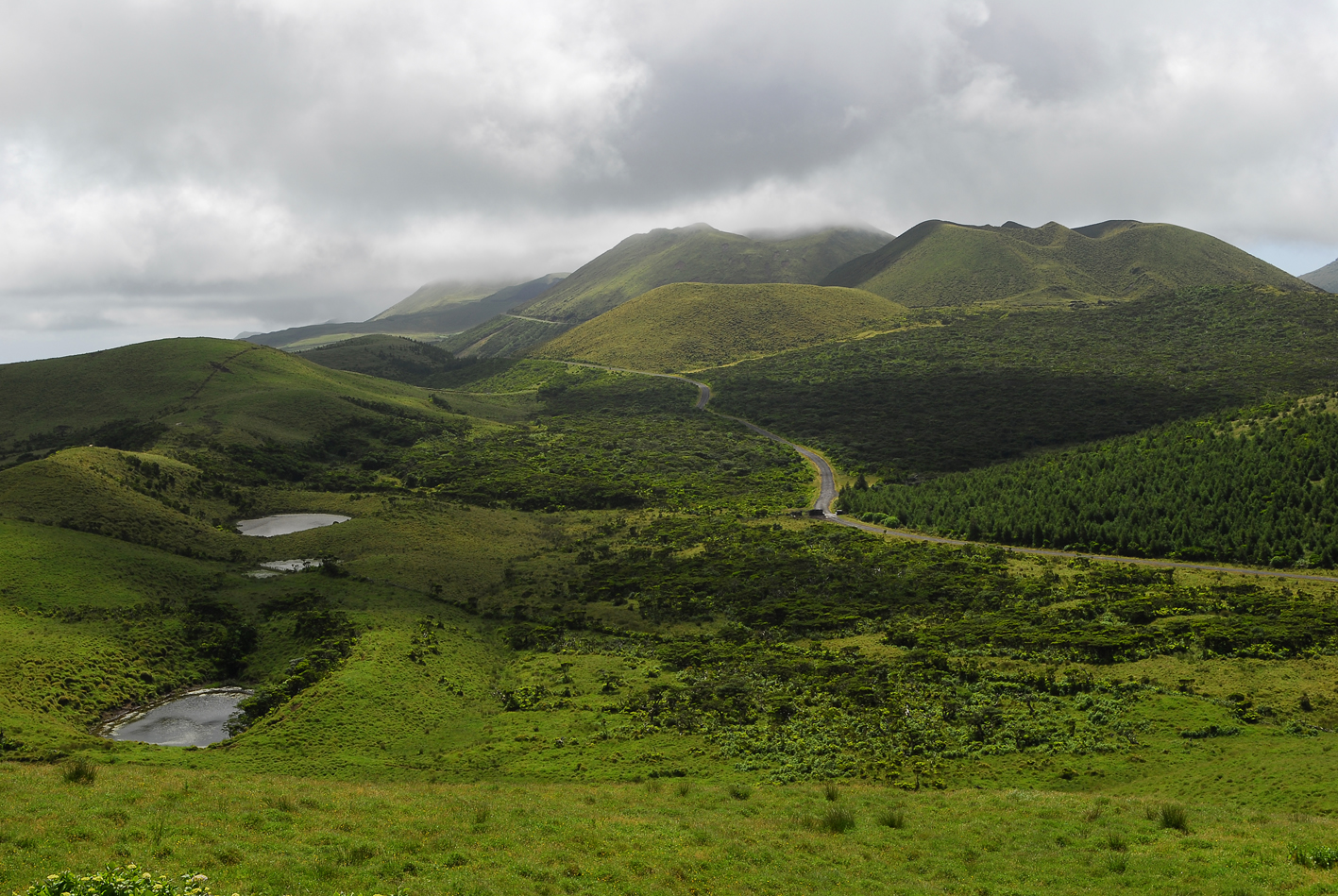Pico Landscape