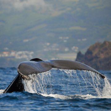 Le monde des baleines avec Yves Paccalet
